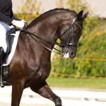 Important Questions To Ask When Choosing Horse Supplements