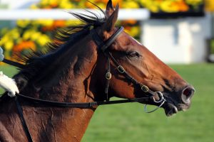 Safe EIPH Bleeding Treatment For Athletic Horses