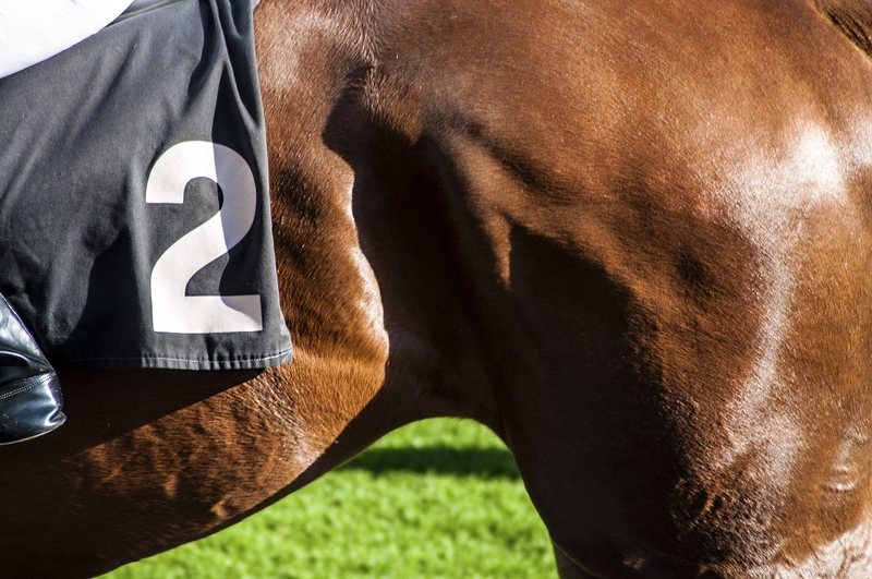 Best Natural Remedies For Horses That Tie Up