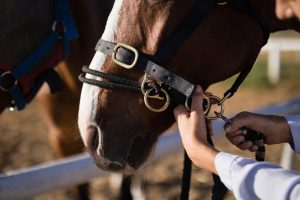How Can I Protect My Horse From Equine Herpes Virus (EHV-1)