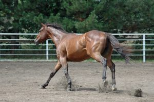What Is The Best Horse Feed Supplement For Performance Horses?
