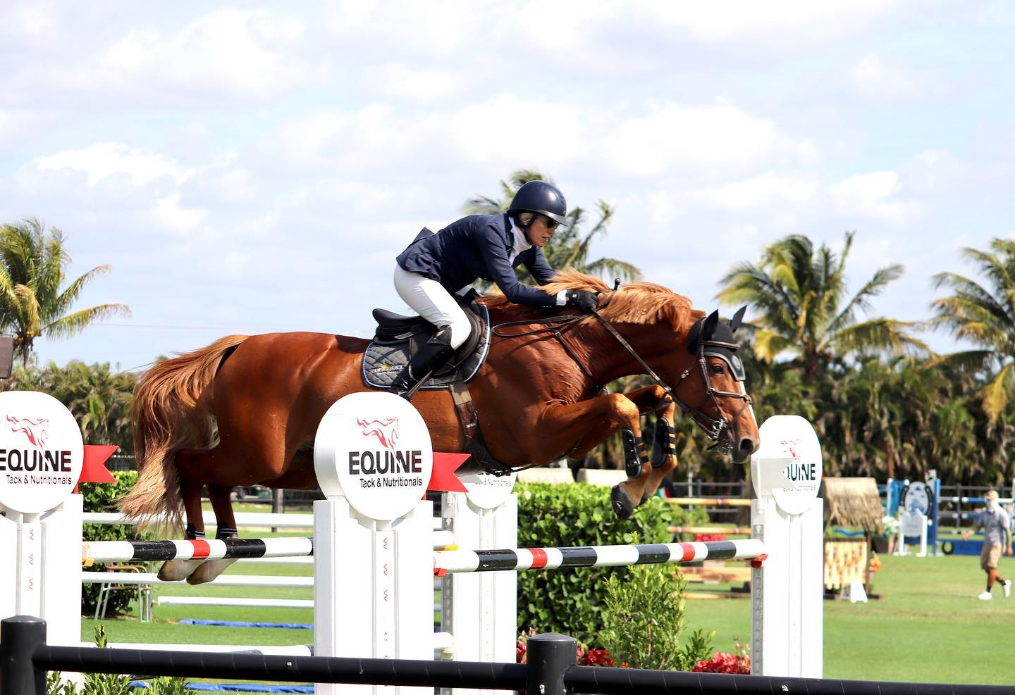 Equine Health Products For Show Horses