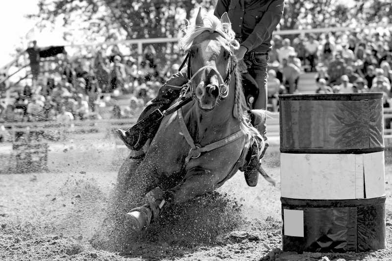 How Do You Keep a Barrel Horse With Gate Issues Calm?