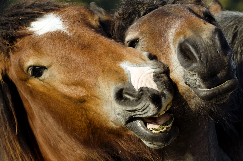 How Does a Horse Get Equine Herpes Virus (EHV-1)