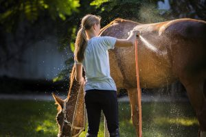 Summer Horse Health Tips For Hot Weather