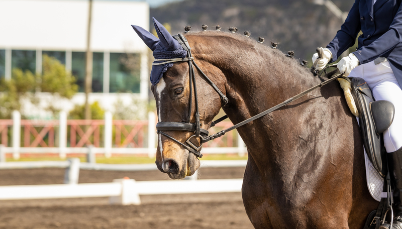 The Best Muscle Supplements For Competition and Show Horses
